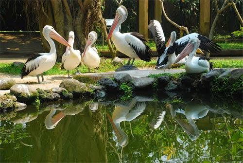 Tempat Wisata Di Bali : Bali Bird Park