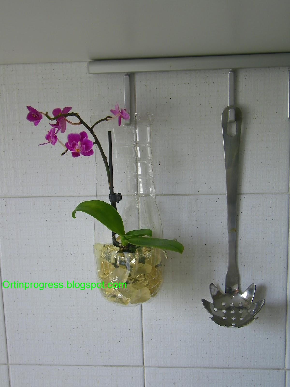 Orti in progress perch tenere l 39 orchidea in cucina - Come curare un orchidea in casa ...
