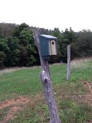 Bluebird box - most active