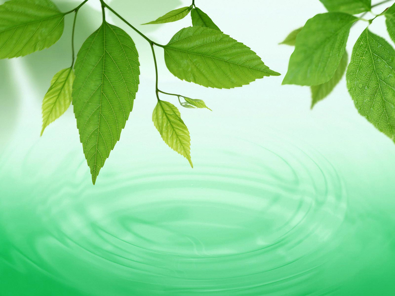 free windows background wallpaper. Free New Green Leaf Wallpaper