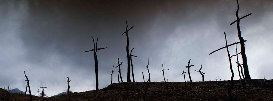 El Bosc de les Creus / The Forest of Crosses