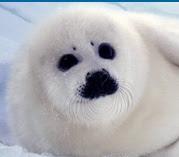 salviamo le foche