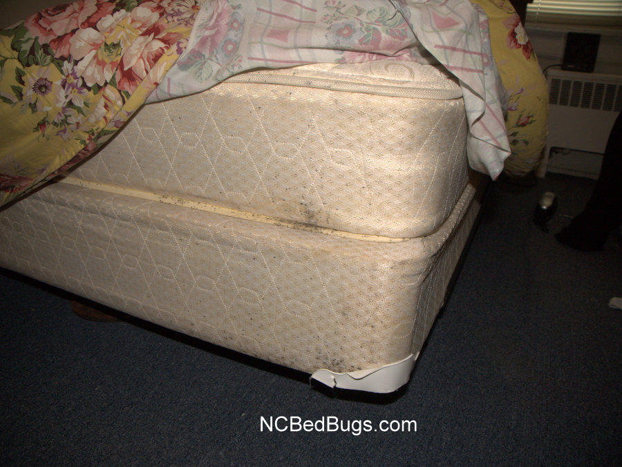 Signs Of Bed Bugs On A Mattress   Old Signs