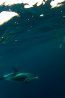 Dolphins in the N Sea - I got this photo with the GoPro on the end of a boathook.