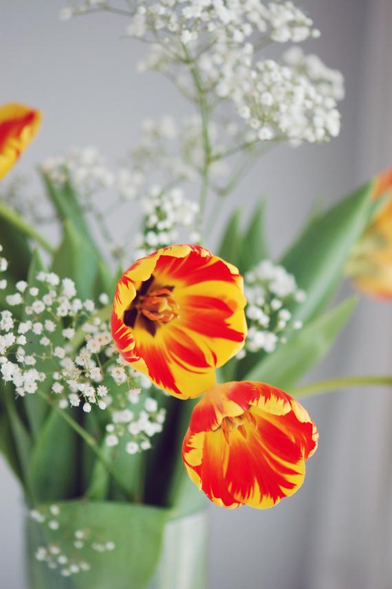 Des muffins aux pommes et noix de coco un bouquet de tulipes for Bouquet de tulipes