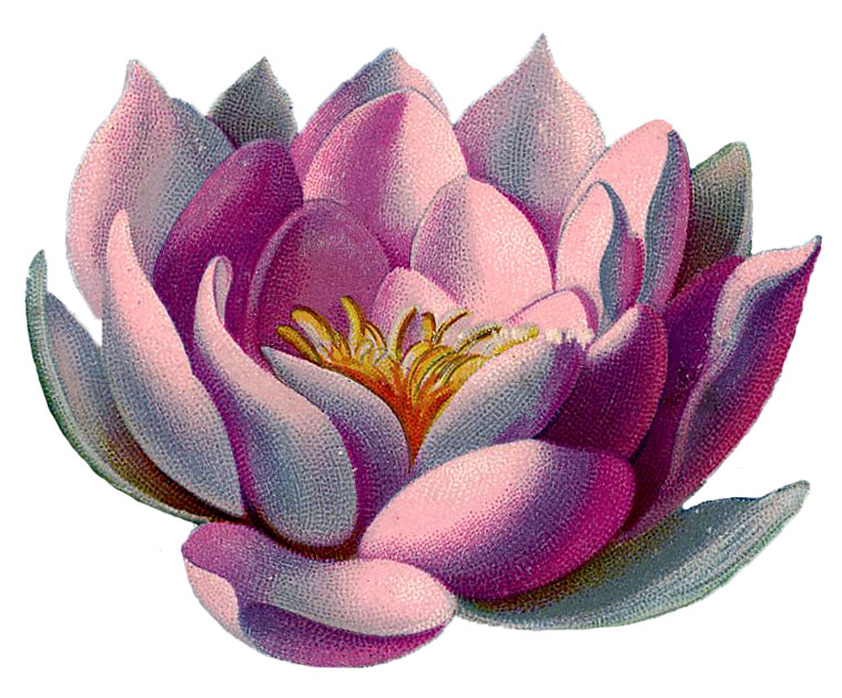 Water Lily Graphic