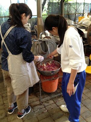 体験/観光 紅芋掘りと紅芋チップス作り