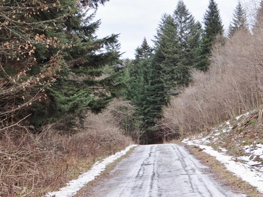 Rezerwat Przyrody Sine Wiry - Bieszczady