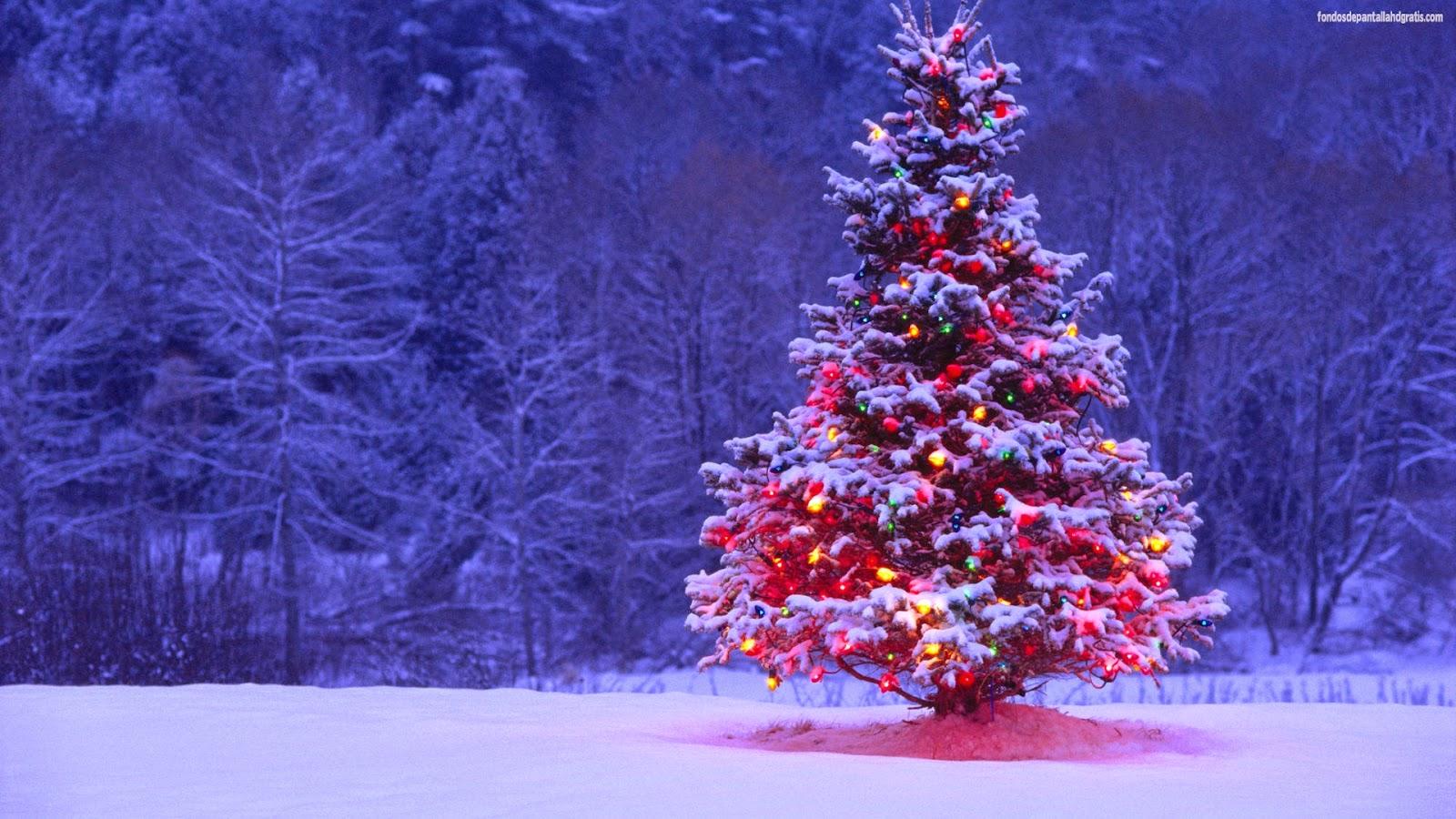 imagen de tierna navidad