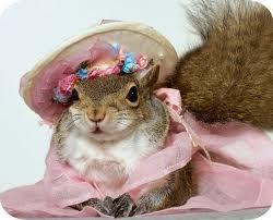 Darn squirrels!
