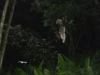 VIDEO POCONG TANAH KUSIR (YOUTUBE) FENOMENA SERAM