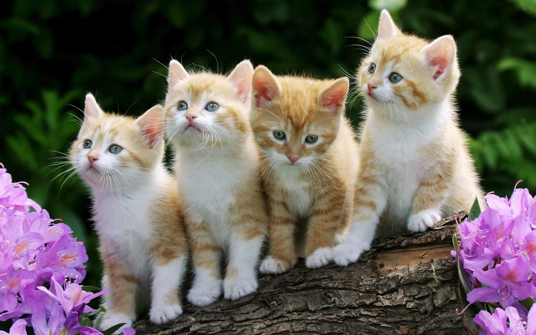 Compartiendo Fondos: fondos de gatitos tiernos