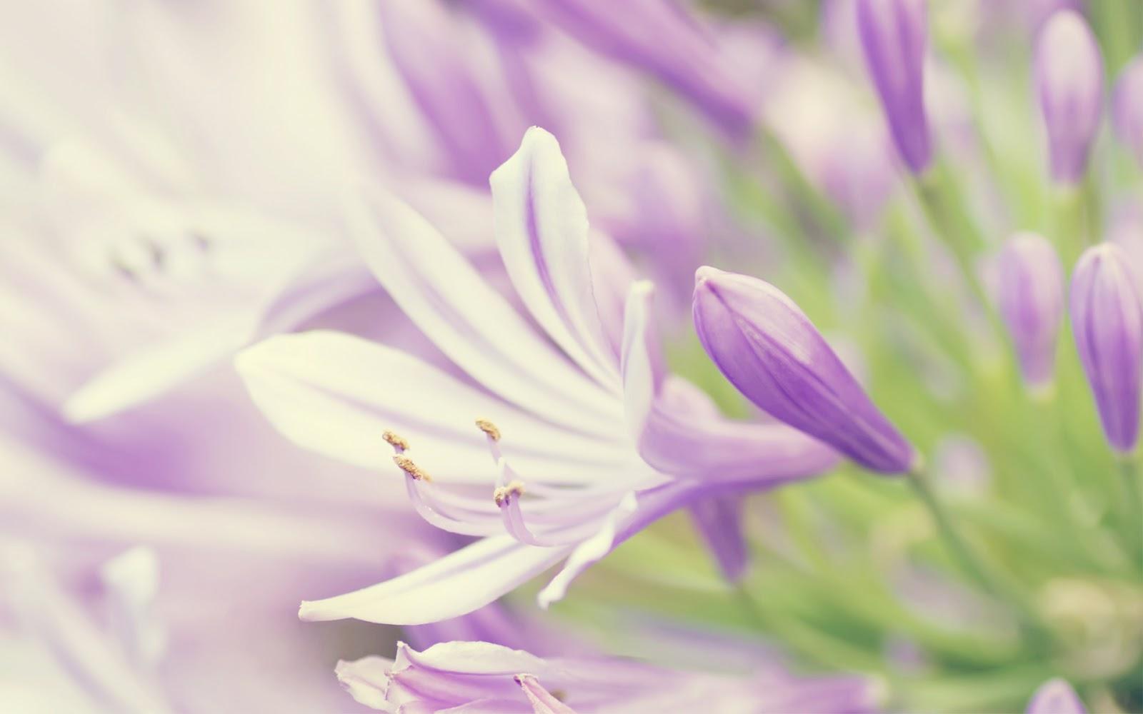 30 Wallpaper Bunga Paling Indah Dan Cantik Buat Laptop Dan