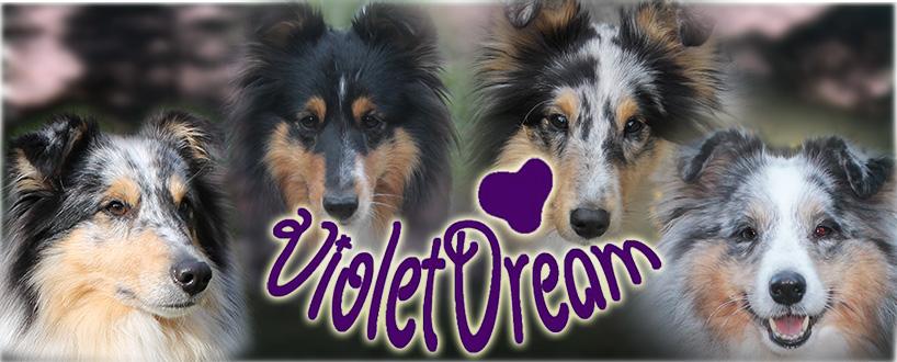 Violetdream kennel