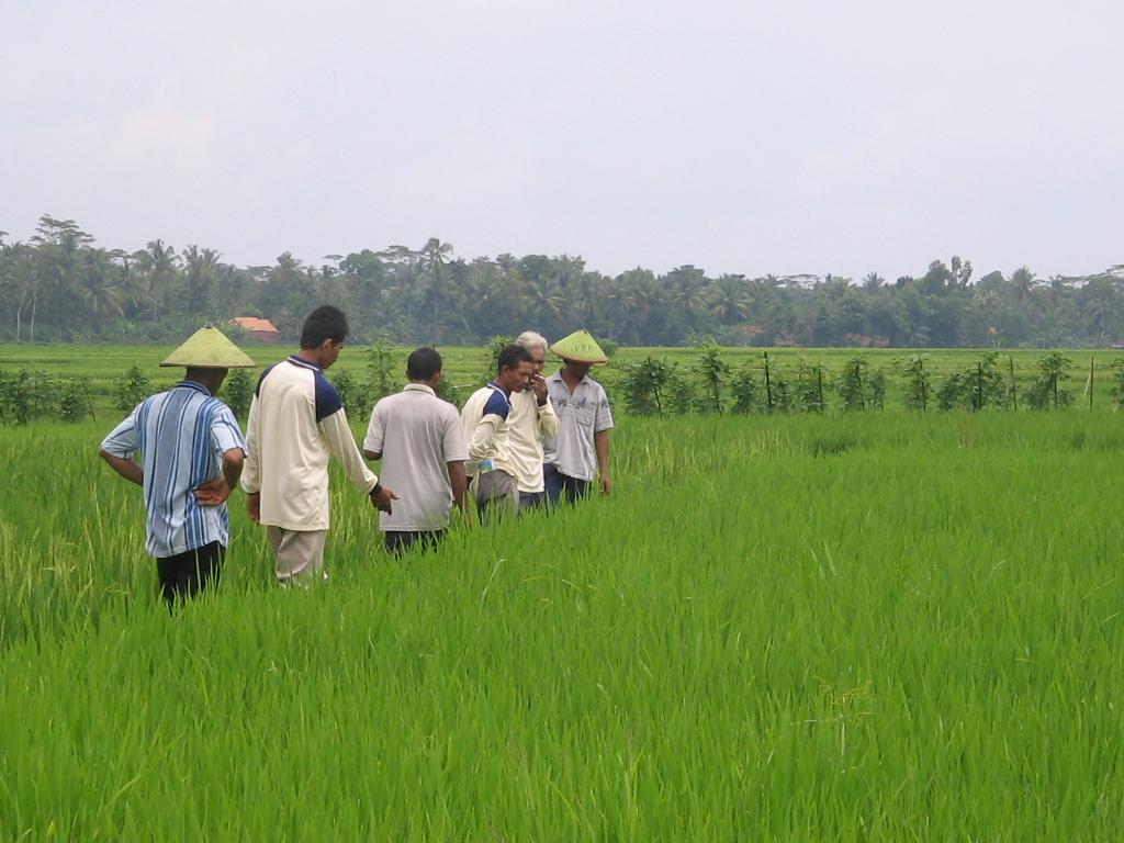 Pertanian Indonesia Di Masa Depan Pusat Ilmu Pertanian