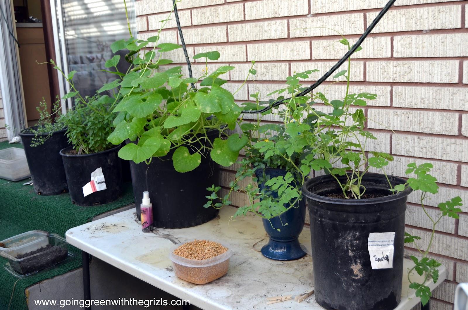 Beginner Gardening Tips - Homespun Aesthetic