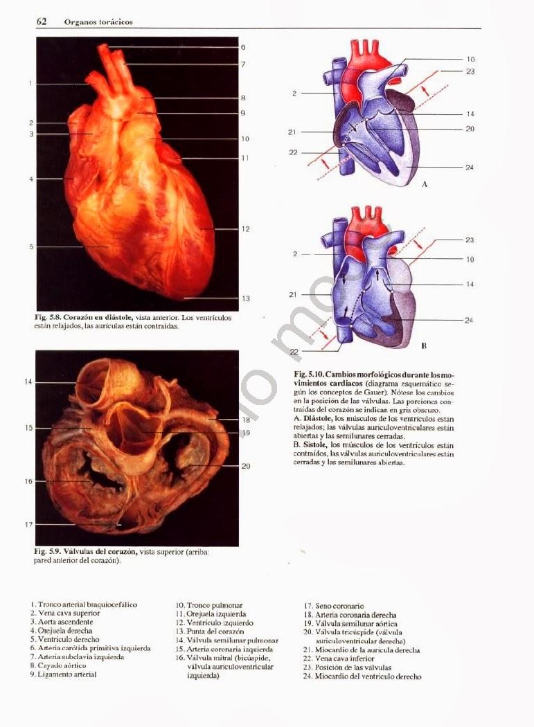 Excepcional Fundamentos De La Anatomía Y Fisiología Humana Octava ...