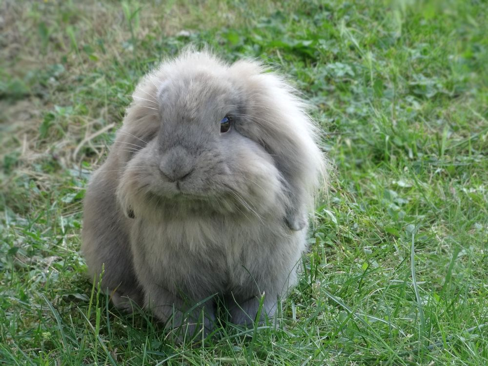 Lapin D Appartement