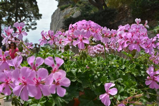 Augusto Gardens Capri Flowers