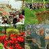 Ungkapan Rasa Syukur Masyarakat di Festival Cihideung, Parongpong