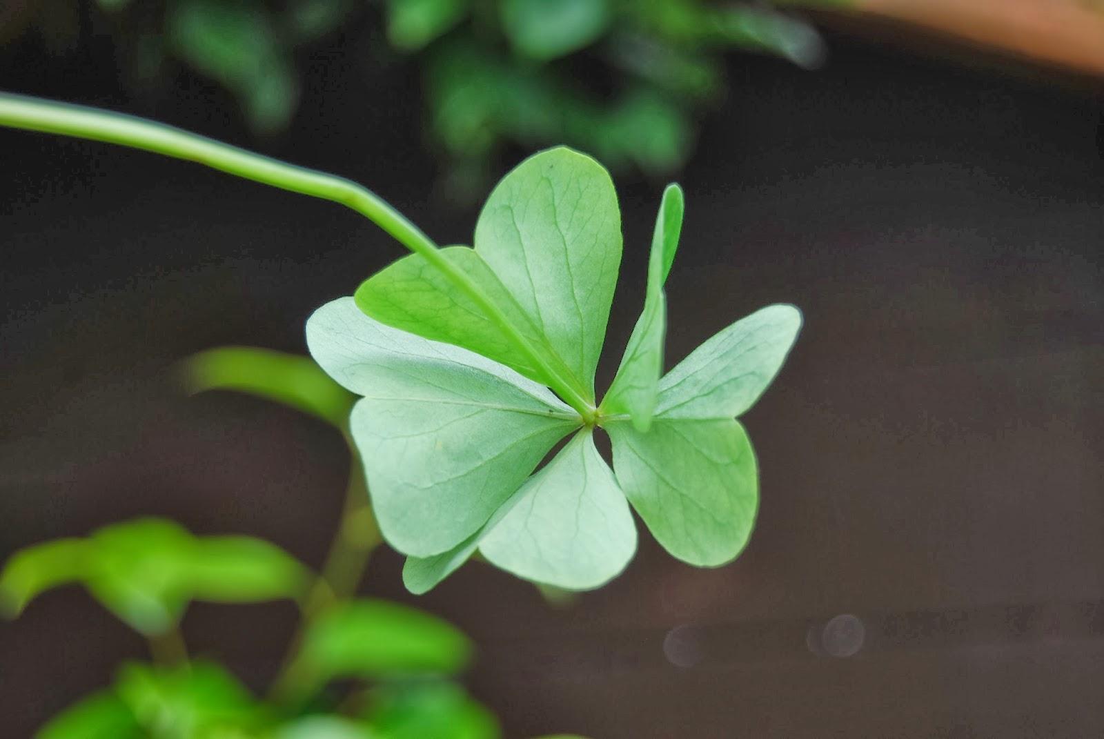 Las cosas de la abuela cris buena suerte - Cosas que atraen buena suerte ...