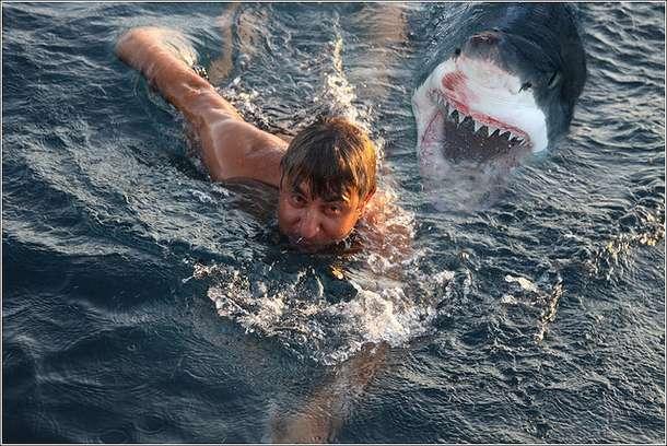 foto ataques de tiburon: