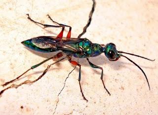 ゴキブリの画像 p1_3