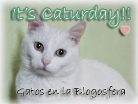 Gatos en la Blogosfera