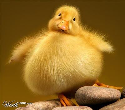 foto lucu, foto terlucu hewan gemuk, hewan gemuk lucu, hewan gemuk paling lucu