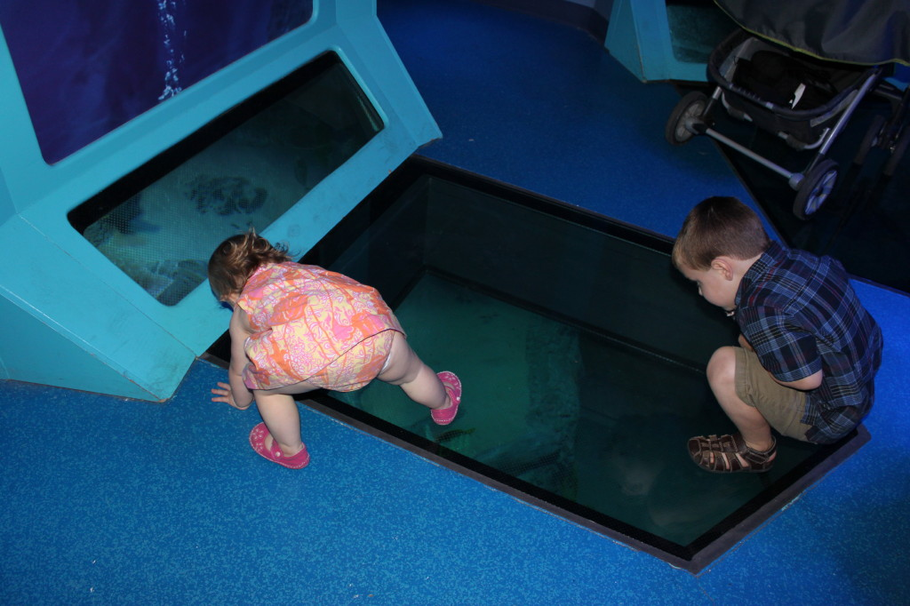 The Parnell Family Aquarium At Grapevine Mills