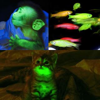 Hewan Bioluminesensi rekayasa manusia