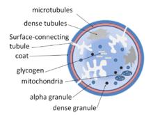 Platelet diagram