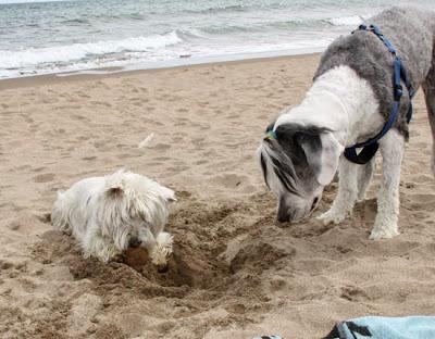 playa para perros Estartit