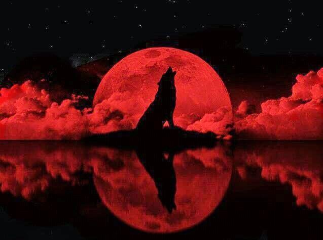 Season 2: Werewolf - Shadow Pine - Day 1 Ac7bd56225b476c00c1094293260fffd