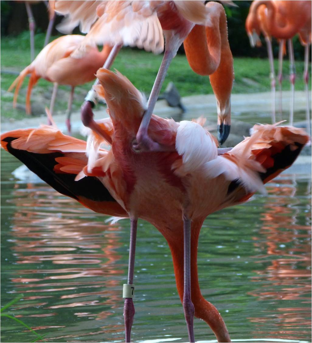 Beasts in a Populous City: Flamingo Friday: Other Words