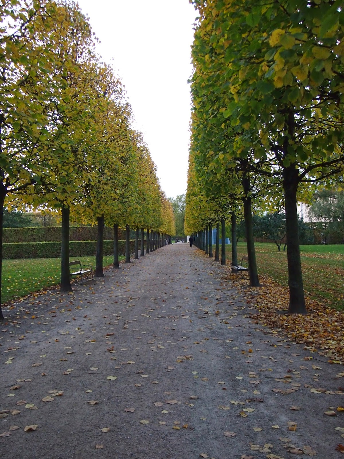 straight trees in the Royal Gardens