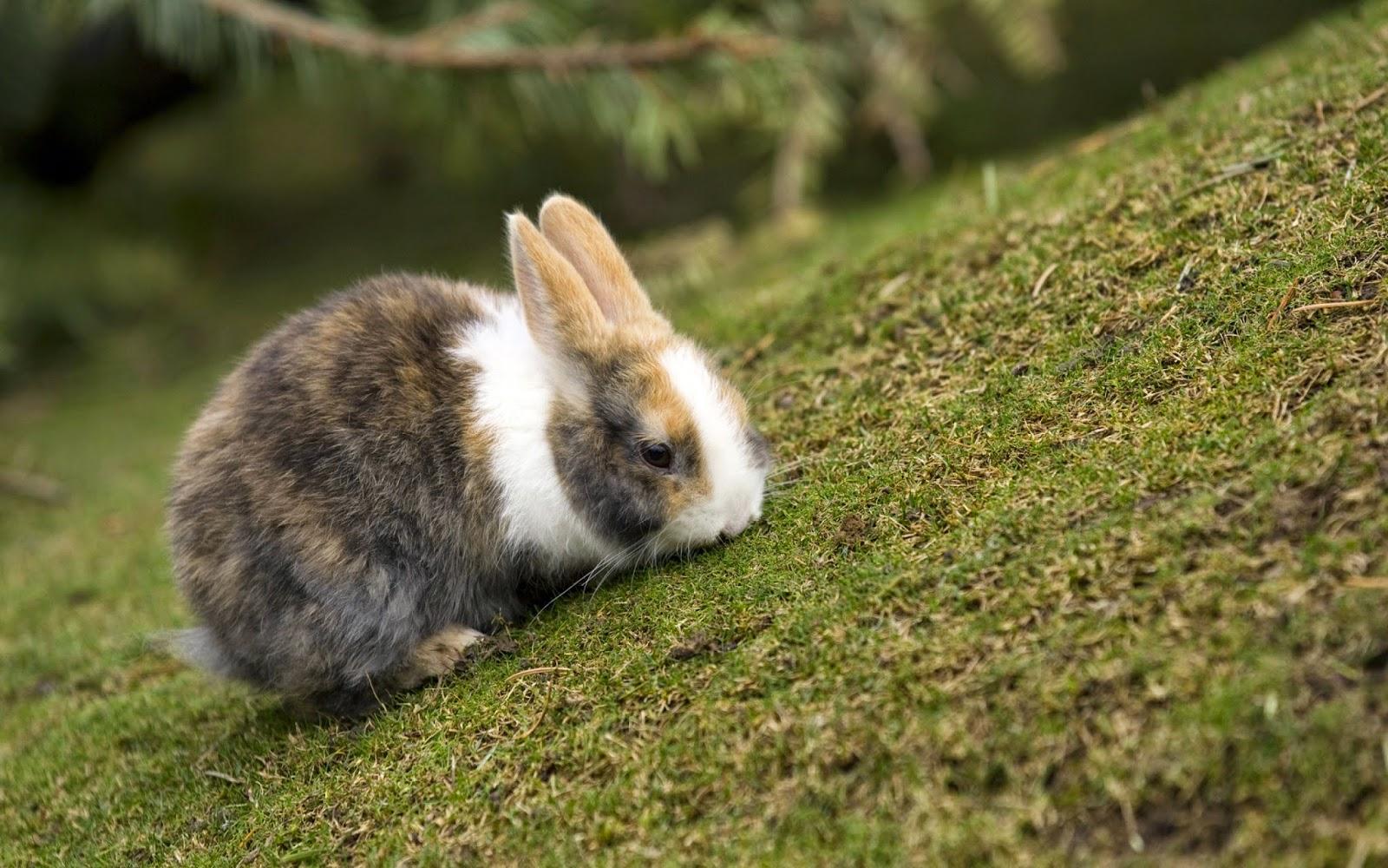 Conejo: cuidados y nombres para tu mascota. Conejo doméstico