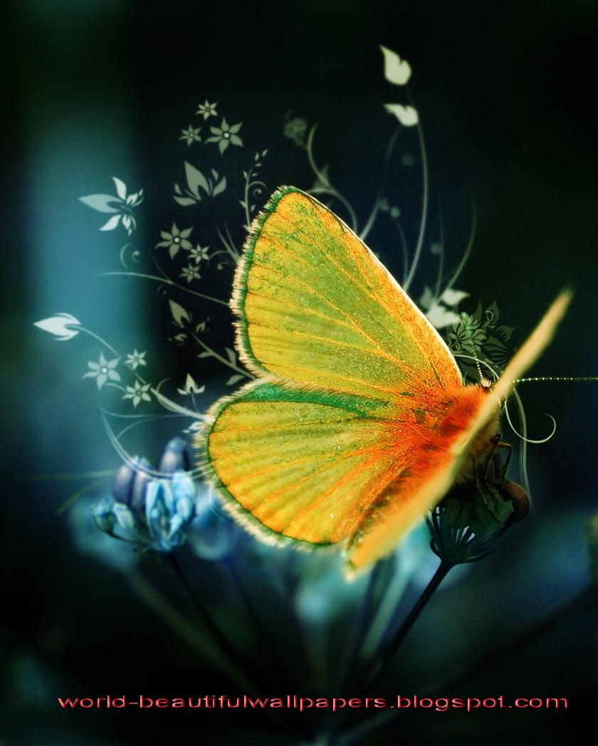 Beautiful Wallpapes: Beautiful Wallpapers: Beautiful Butterflies Wallpaper