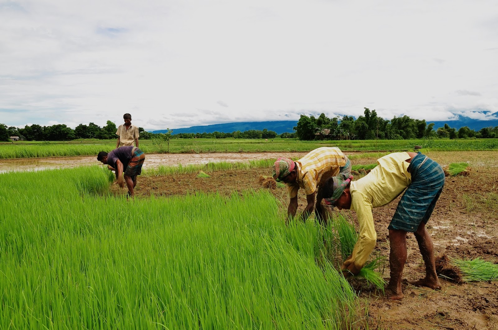 importance of agriculture in economy essay 3 table of contents the economic importance of agriculture for sustainable development and poverty reduction: findings from a case study of ghana5.