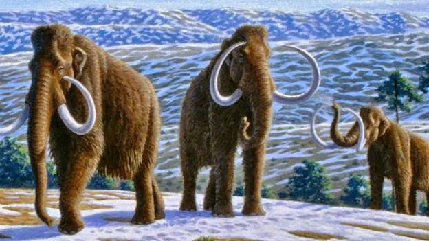 mammoth's