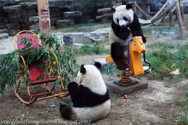 Finny pandas.