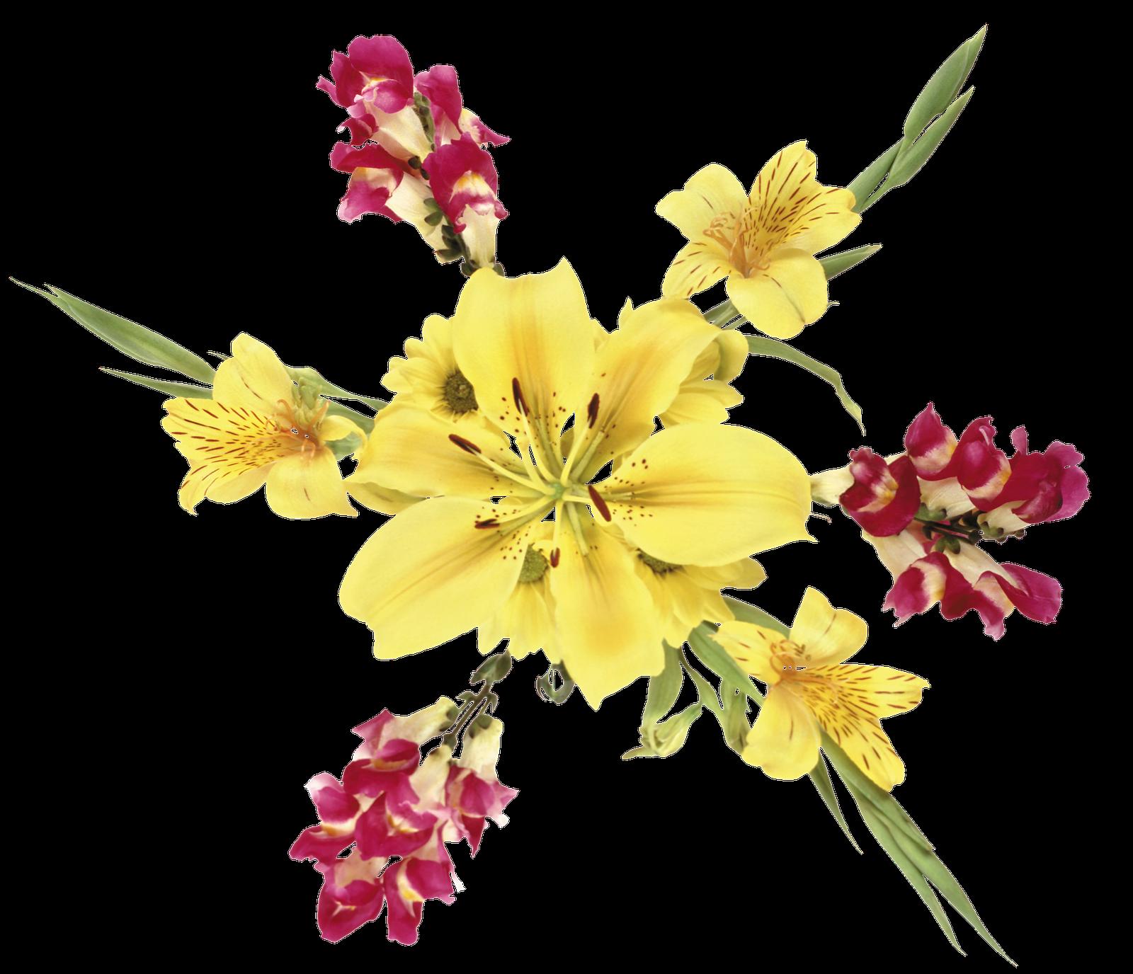Mango - Flor De Verano