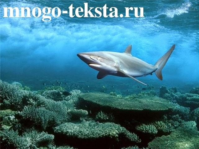 Рыба акула, удивительные факты про акул, невероятные особенности и свойства акул, документальные фильмы про акул