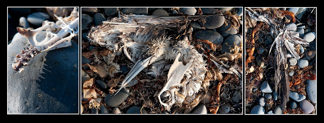 Heron, Nova Scotia, Rocks, Beach, Bird, Bones