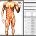 Gamification of human anatomy