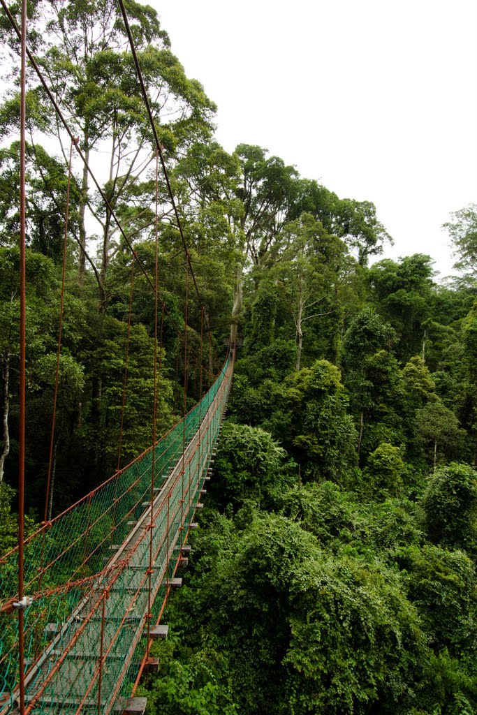 A primary (un-logged) rainforest is home to many species of birds and mammals which prefer to dwell only in the higher levels of the canopy (tree -cover). & A lot of wanderings around India A little around the world: July 2012