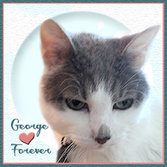 George  RIP