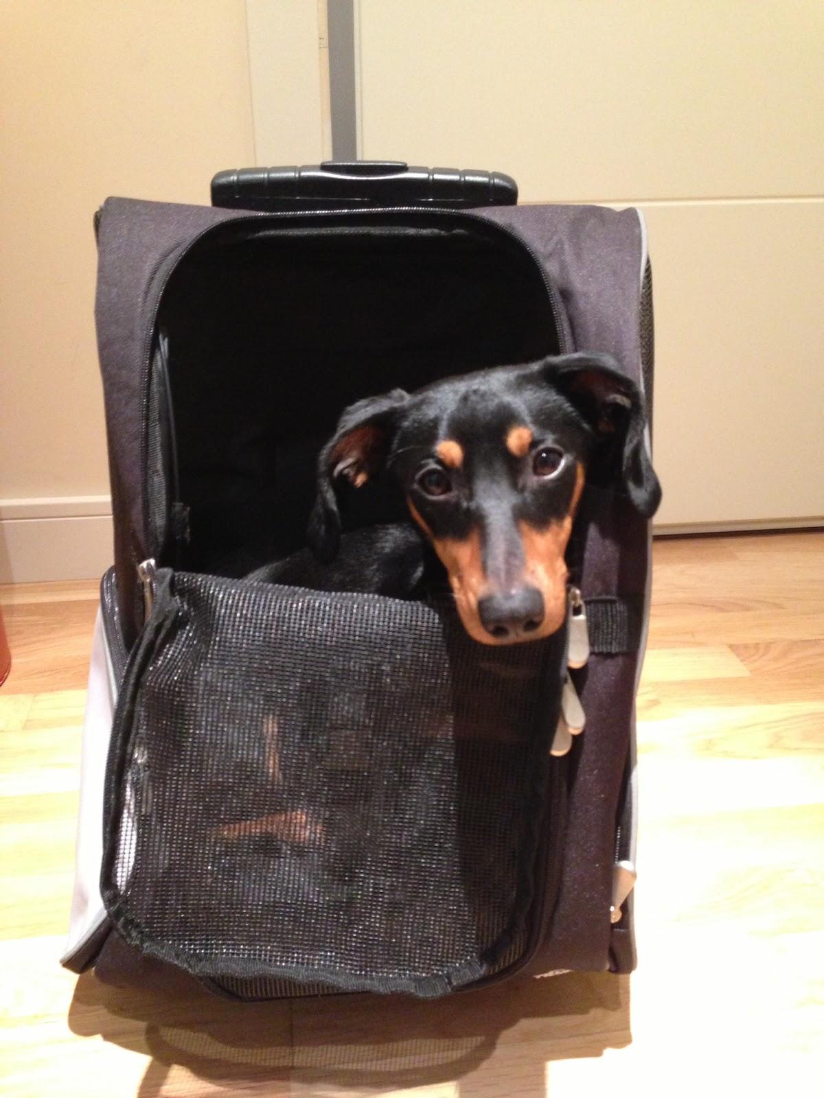 Consejos viajar con perro en avión