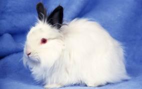 penyakit kelinci, cara merawat kelinci hias, cara memelihara kelinci, budidaya kelinci, beternak kelinci