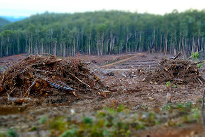 Clearcut logging in Stoodley Forest Tasmania